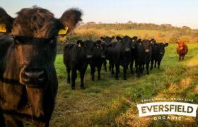 Eversfield Organic Ltd