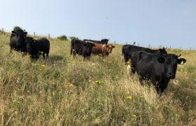 Homestead Beef - The Beefery