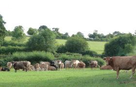 Upper Leigh Farm